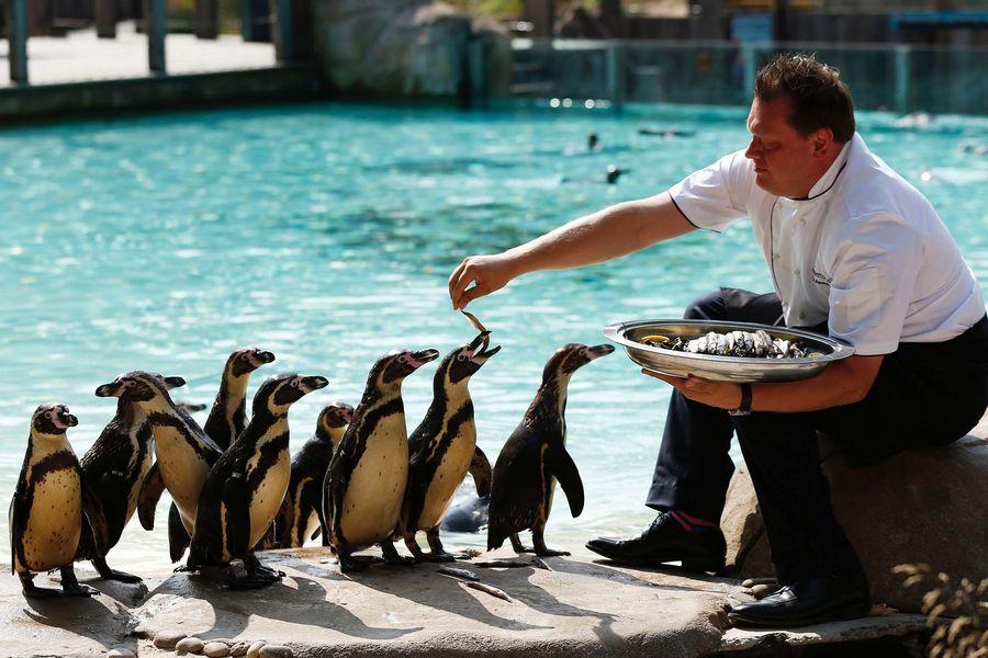Лондонский зоопарк. Самые популярные достопримечательности Великобритании