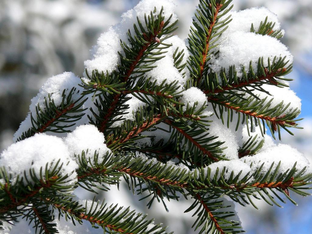 Зимние праздник