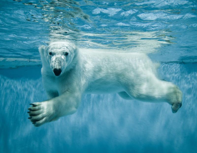 Зоопарки: вред и польза для животных... и человека